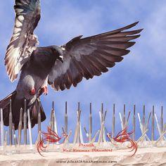 Plastik Kuşkonmaz Nedir ? Kuşların konarak veya yuvalanarak dışkıları ile oluşturdukları görsel kirlilik, malzeme deformasyonu ile ve taşıdıkları hastalıkları yaşam alanlarımızdan uzak tutmak için kullanabileceğiniz plastik kuşkonmaz bariyeridir. Güvercin, karga, martı, saksağan gibi iri kuşların yanı sıra sık diken ve çubuk sayısı sayesinde sığırcık, serçe gibi küçük kuşlarda da etkilidir. Şeffaf olduğundan kullanıldığı yerde kamufle olur ve böylece mimari estetigi bozmaz.