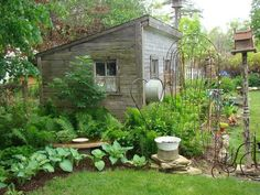 she shed landscaping with ferns and hosta