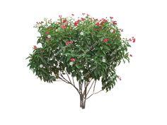 Visit the post for more. Shrubs, Photoshop, Plants, Image, Shrub, Plant, Planets