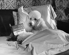 Dog reading in bed by M.E. Browning