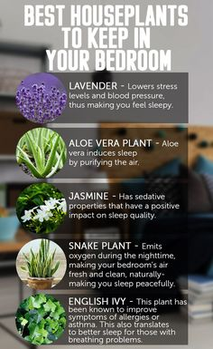 Best Indoor Plants for Allergies . Best Indoor Plants for Allergies . Did You Know that some Indoor Plants Can Protect You From
