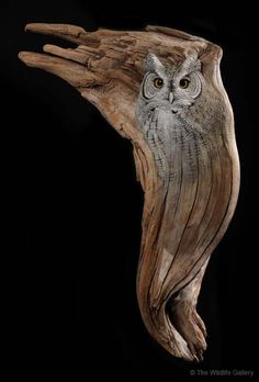 Screech Owl, by wildlife artist and sculptor Earl Matz . Screech Owl, by wildlife artist and sculp Easy Clay Sculptures, Sculpture Clay, Ribbon Sculpture, Ceramic Sculptures, Owl Art, Bird Art, Owl Illustration, Driftwood Crafts, Driftwood Ideas