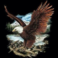 Eagle Images, Eagle Pictures, Nature Pictures, Native American Pictures, Native American Art, Eagle Tattoos, Tribal Tattoos, Eagle Drawing, Eagle Wallpaper