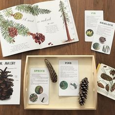 It's technically winter, some days it feels like spring, but there are remnants of fall still around us. We picked up some of the ka-zillion pine cones from our yard and used and resources to identify them. Happy Friday 😀 via Preschool At Home, Toddler Preschool, Preschool Ideas, Montessori Science, Teaching Science, Letter G, Unit Studies, Play To Learn, Pine Cones