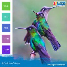 Colibríes que inspiran tonos de #colores apropiados para los interiores de tu hogar.  http://www.prisa.com.mx/megacolor    #ColoresQueCubrenTodo