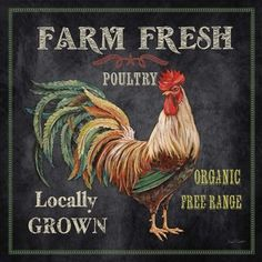 'Farm Fresh Rooster' by Jean Plout Graphic Art on Wrapped Canvas