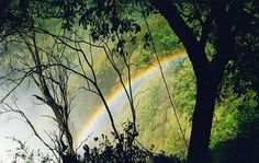 The Safari 'Big Five', Zambesi Valley, Zambia ~ best place to see wild life Wonderful Places, Beautiful Places, Rainbow Connection, Somewhere Over, Victoria Falls, Over The Rainbow, Natural Wonders, Places To See, Waterfall
