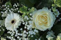 Risultati immagini per fiore gypsophila
