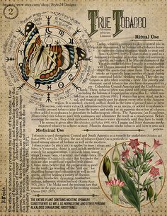 True Tobacco Book of Shadows page, Ritual Poisonous Plants - All the Interesting Information You're Wondering Here Magic Herbs, Herbal Magic, Poisonous Plants, Wiccan Spells, Modern Witch, Interesting Information, Kitchen Witch, Old Paper, Book Of Shadows