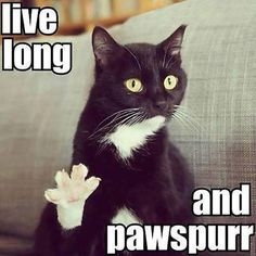 Funny pictures about Trek kitty. Oh, and cool pics about Trek kitty. Also, Trek kitty. Funny Cat Memes, Funny Cute, Funny Happy, Cat Puns, Funny Pics, Top Funny, Hilarious Jokes, Super Funny, Smash Book