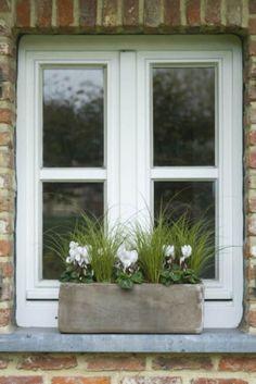 Top 10 des plantes pour jardinières d'hiver - Jardin - Hiver - Femmes d'Aujourd'hui#foto#foto