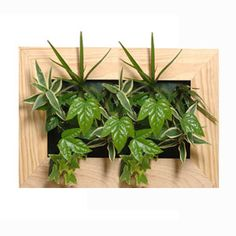 cadre vegetal modern