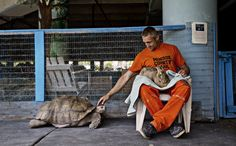 Jail isn't exactly a place you want to visit, but the Stock Island Detention Center in Florida has turned its facility into a rehabilitation center for both people and animals as it doubles as an sanctuary for abused, neglected, or confiscated exotic pets and farm animals.