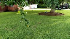 Arturo's Lawn Care & Landscaping is a landscaping contractor providing affordable lawn care services in Alvin, TX. Call now: (281) 204-2101