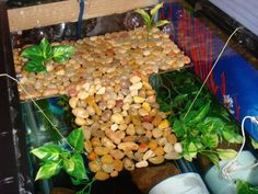 DIY Turtle dock, another idea for basking area until he gets big enough to need the whole tank filled with water - Turtle Topper Above Tank Basking Platform Turtle Care, Pet Turtle, Baby Turtles, Water Turtles, Turtle Tank Setup, Turtle Dock, Turtle Tanks, Turtle Basking Area, Turtle Basking Platform