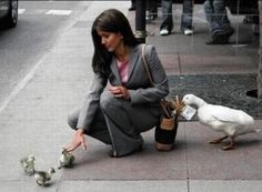 Lady falls for Duck Con