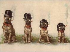 Cigar Smoking Pugs Vintage Victorian Canvas Dog Art   eBay