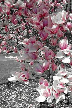 Colour Splash, Color Pop, Peach Colors, 2 Colours, Spring Images, We Are Best Friends, Photo B, Love Flowers, One Color