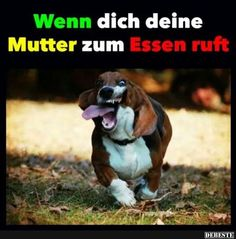 funny, funny pictures, funny photos, exercise, How I think I look while jogging vs. How I actually look Funny Shit, Funny Cute, Funny Memes, Funny Animal Pictures, Funny Photos, Funny Animals, Dog Pictures, Tierischer Humor, Go Jogging