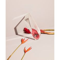 Floral Daze Photo: Blaise Misiek  #Spring #Spring2018 #Stilllife #stilllifephotography