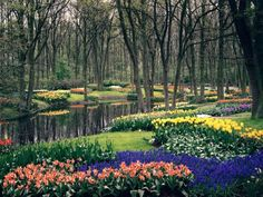...go to the Tulip Festival at the Keukenhof Gardens - Lisse, Holland