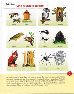 Imagine Homeschooling, Rooster, Insects, Homeschool, Chicken