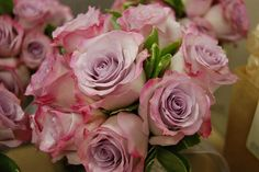 Purple Haze Roses by Georgianne Vinicombe at Monday Morning Flower and , via Flickr
