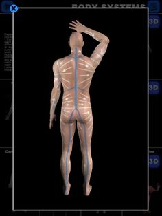 Learn about the Lymphatic Drainage System, a second circulatory system in the body