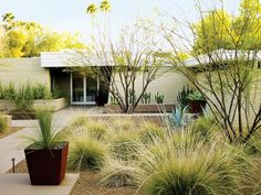 Ideas for Landscaping Stone With for Every Garden in the West Drought-tolerant yard Replace a boring lawn with golden gravel dotted with an ornamental grass like deer grass (Muhlenbergia rigens), then add a few accent plants like blue-leaved Weber agave Drought Resistant Landscaping, Low Water Landscaping, Drought Tolerant Landscape, Modern Landscaping, Outdoor Landscaping, Front Yard Landscaping, Landscaping Ideas, Landscaping Software, Dessert Landscaping