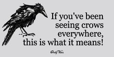 Crows are incredibly intelligent creatures. In fact, their brain/body size…