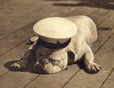 Sailor Bulldog....ollies part in rows bday party