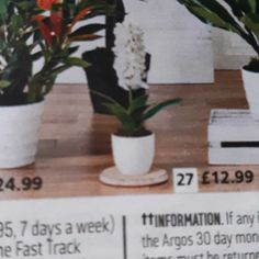 Big Bedrooms, Argos, 30 Day, Dream Big, Planter Pots, Plant Pots