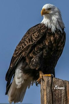 Eagle Pictures, Bird Pictures, Tatoo Nature, Bird Barn, Barn Owls, Types Of Eagles, Colorful Birds, Exotic Birds, Eagle Wings