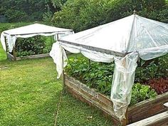 Canopy greenhouse