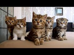Funny Cats and Cute Kittens Compilation | Happy Birthday Rocky and siblings ! - YouTube Adorable!!!!