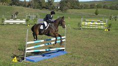 MATAMATA Horse Trial - show jumping 2016