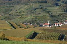 baden wurttemberg germany vineyard