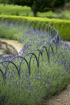 Arched railings + circular lavender bed around a lily pool at Felbrigg Hall, Norfolk UK