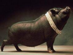 """She would bring her posh little pig """"Peggy"""" with her to a friends house"""