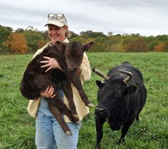 All About Irish Dexter Cattle Mary Jane Phifer Heritage Cattle