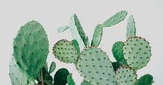 Kaktus Copenhagen