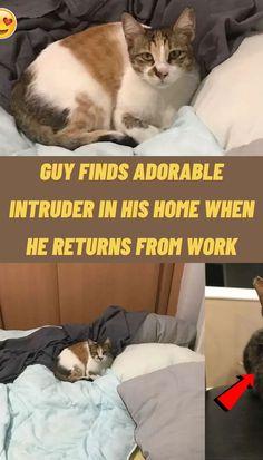 #Guy #finds #adorable #intruder #home #returns #work