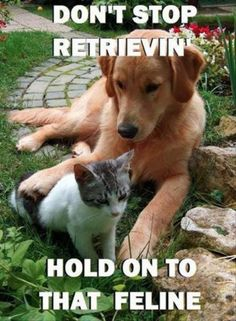 Do you have Dog and Cat who they are awesome buddies? If yes click the image, Fill in the gaps and let us show this adorable relationship!  #photocontest #giveaway #p4a #dog #puppies #cat #kittens