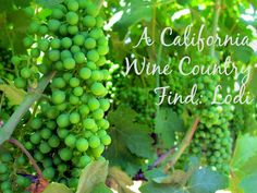 Just 40 minutes from Sacramento is a hot new wine country where you can learn about wine making and grape varietals. Click through for a look at Lodi wine country from This Is My Happiness travel blog