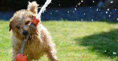 Los cuidados de los perros en verano, ¡toma nota!