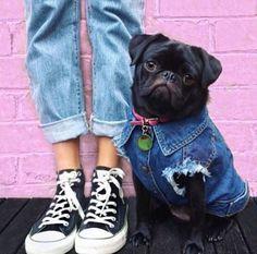 Dog Jacket / Denim Dog Jacket / Dog Vest / Denim Dog by PetHaus