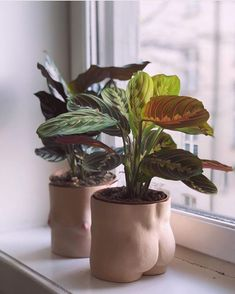 We're all about plants here. Looking to become a plant mom? Geek out with me about cute planters, succulents, low maintenance plants, and plant tutorials on my board! Foliage Plants, Potted Plants, Indoor Plants, Plant Pots, Ceramic Pottery, Ceramic Art, Ceramic Design, Decoration Inspiration, Ceramic Planters