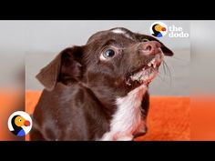 Dog With Crooked Nose Finds Parents Who Think He's Perfect | The Dodo - YouTube