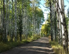 Steamboat Springs is a wheelchair friendly mountain town in the Rockies. Perfect spot for a fall weekend getaway to check out the fall foliage in Colorado.