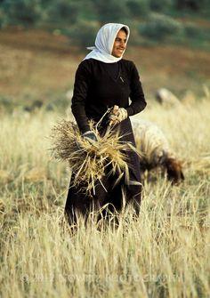 Arab woman harvesting grain in hills near Hebron, Israel